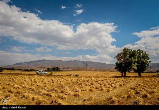 حصاد القمح في حقول شمال غرب إيران22