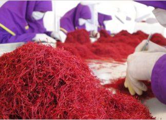 إرتفاع صادرات الزعفران الإيراني بنسبة 25% في غضون 4 أشهر