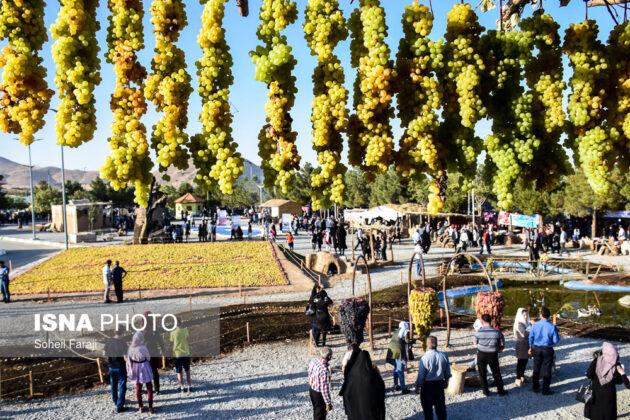 Fifth Urmia Grape Festival Underway in Northwestern Iran 10