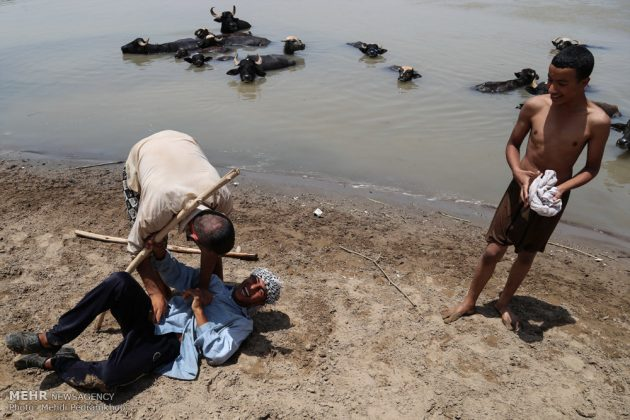 جواميس الماء في نهر كارون في أهواز19