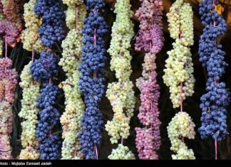 Fifth Urmia Grape Festival Underway in Northwestern Iran 5