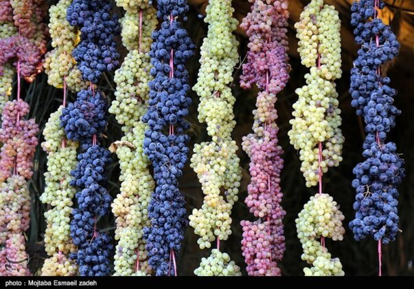 Fifth Urmia Grape Festival Underway in Northwestern Iran 5