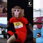 ايران .. القردان الفضائيان ينجبان مولودا