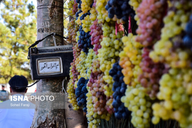 Fifth Urmia Grape Festival Underway in Northwestern Iran 9