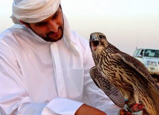 Playing with Iranian Raptors, Popular Entertainment of Arab Sheikhs