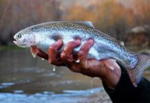 Iran to Export 30,000 Tonnes of Trout This Year: Official