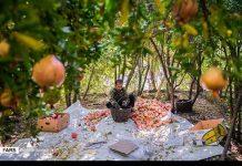 حصاد الرومان في كردستان الايرانية 10
