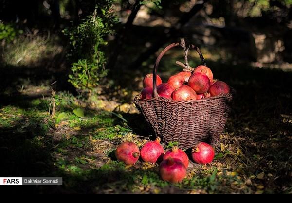 حصاد الرومان في كردستان الايرانية 14