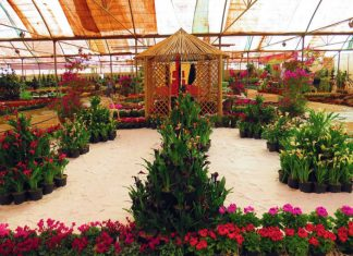 ايران .. صادرات الزهور والنباتات تلامس 80 مليون دولار