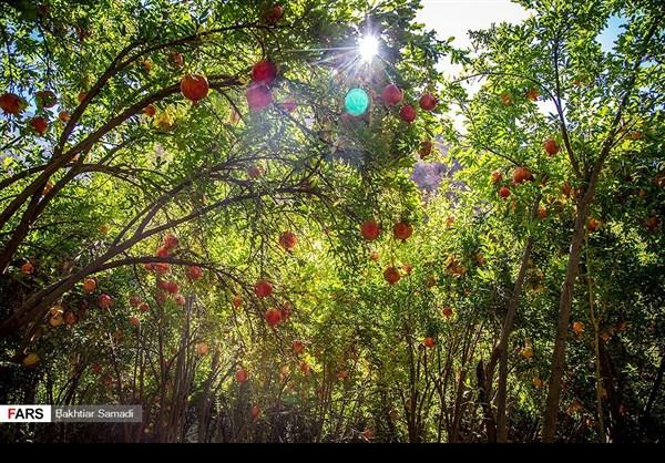 حصاد الرومان في كردستان الايرانية 2