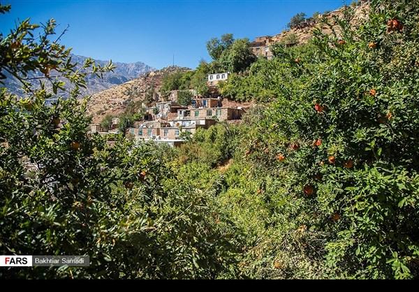 حصاد الرومان في كردستان الايرانية 3