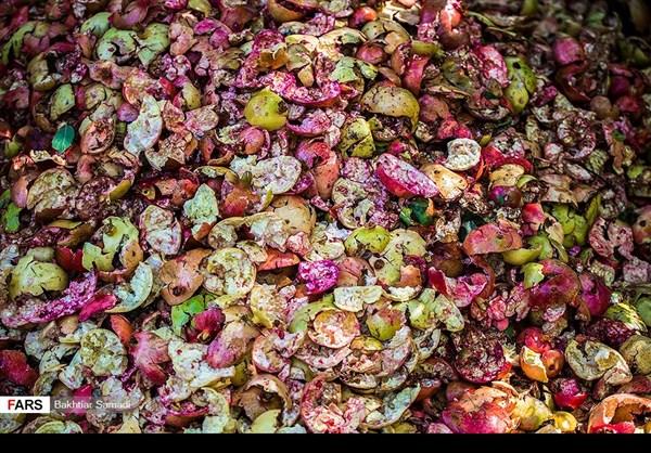 حصاد الرومان في كردستان الايرانية 6