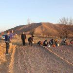 علاقه گردشگران خارجی به برداشت زرشک و زعفران در خراسان جنوبی