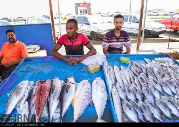 سوق السمک في بندر عباس جنوب ايران 7
