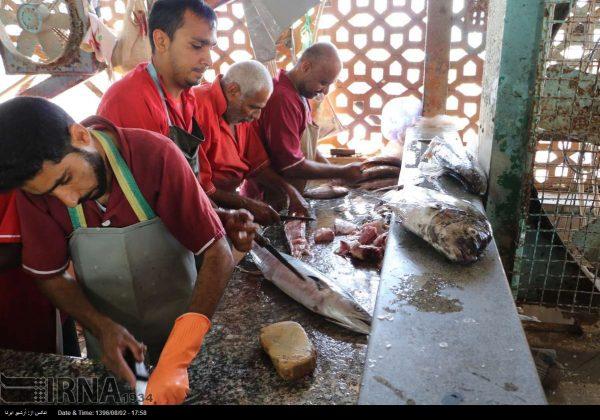 سوق السمک في بندر عباس جنوب ايران 8
