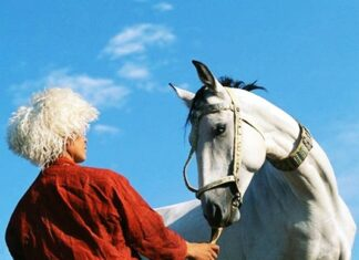 Beauty of Iranian Horses Attracting Tourists