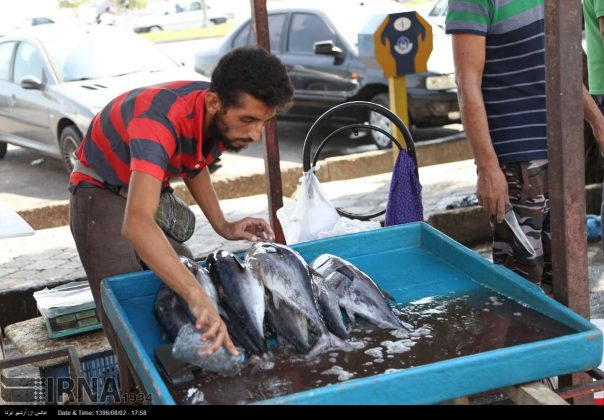 سوق السمک في بندر عباس جنوب ايران 9