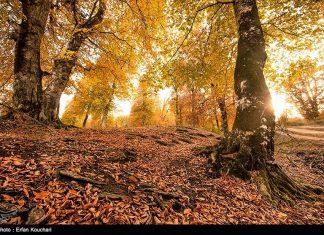 طبیعت ارتفاعات مازیچال استان مازندران مازیچال٬ نام دهکدهای زیبا در نزدیکی کلاردشت 2