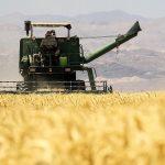ايران تحقق الاكتفاء الذاتي في انتاج القمح هذا العام