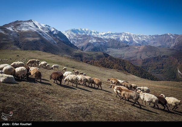 طبیعت ارتفاعات مازیچال استان مازندران مازیچال٬ نام دهکدهای زیبا در نزدیکی کلاردشت 9
