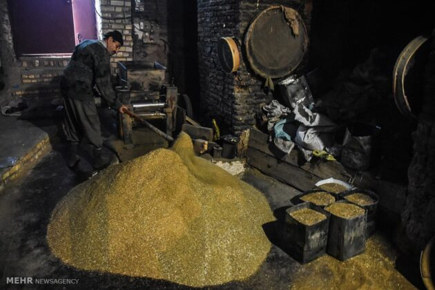 Traditional Seed Oil Extraction in Iran's Shahreza