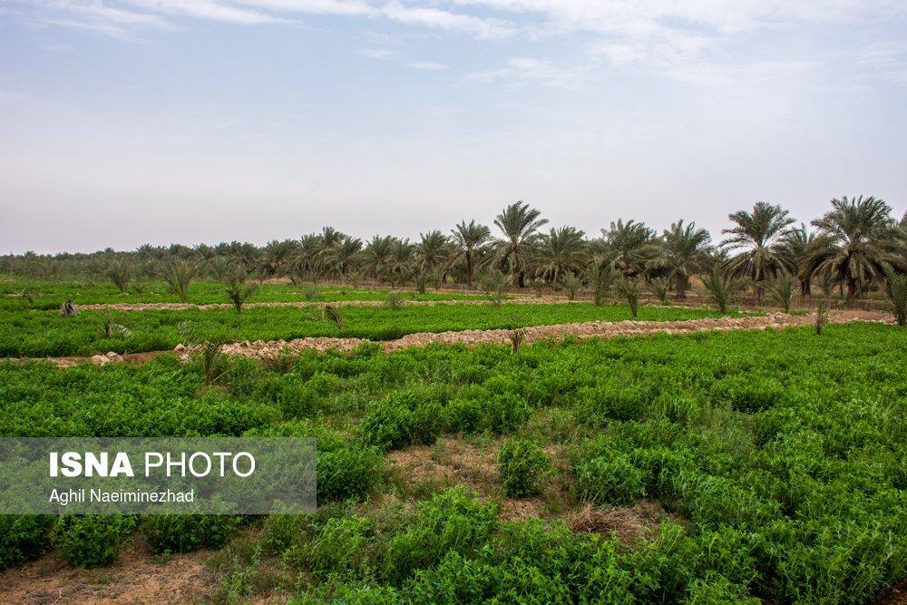 http://ifpnews.com/wp-content/uploads/2018/04/Iran%E2%80%99s-Beauties-in-Photos-Bahmanshir-River-24.jpg