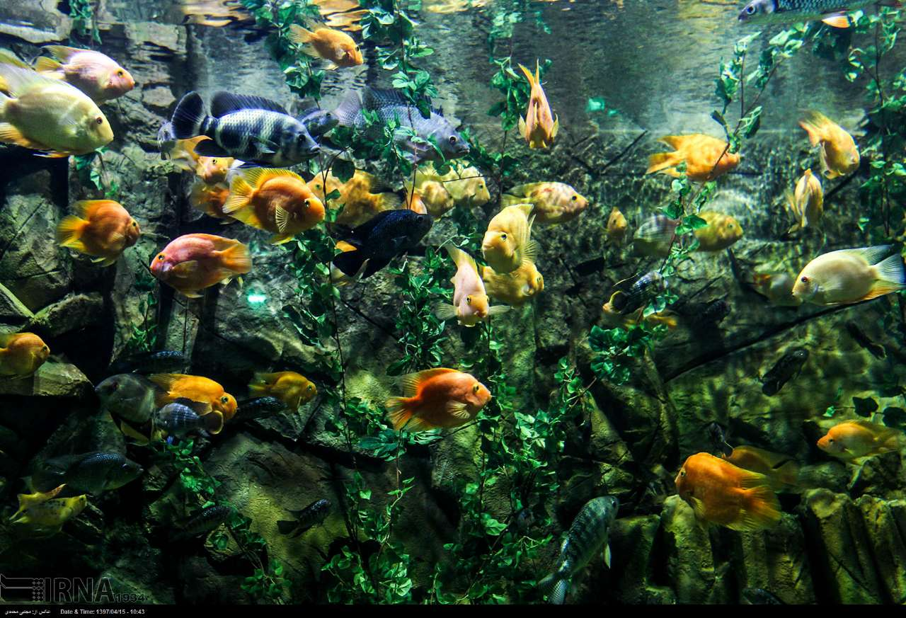 http://ifpnews.com/wp-content/uploads/2018/07/aquarium-anzali-11.jpg