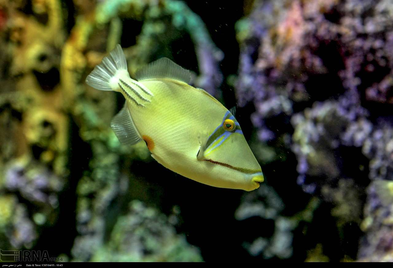 http://ifpnews.com/wp-content/uploads/2018/07/aquarium-anzali-16.jpg
