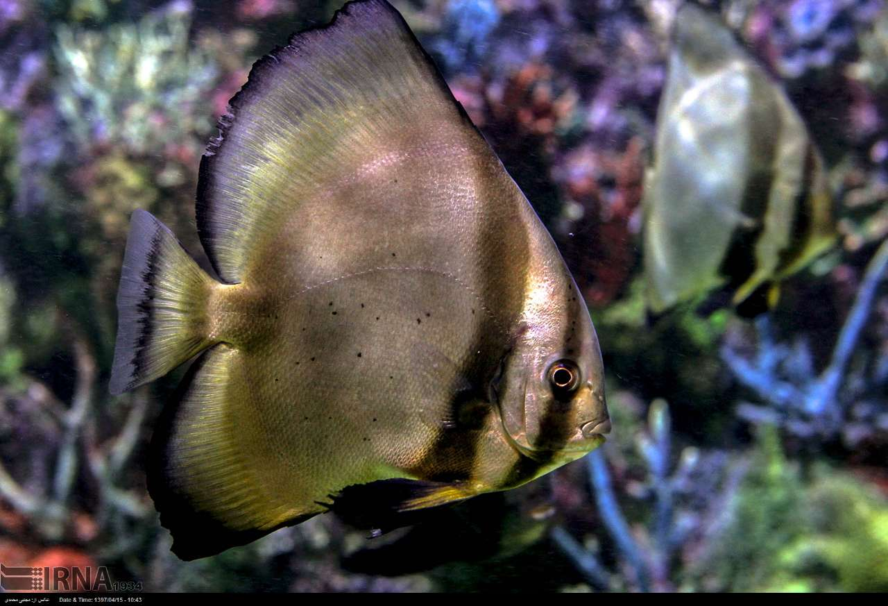 http://ifpnews.com/wp-content/uploads/2018/07/aquarium-anzali-2.jpg