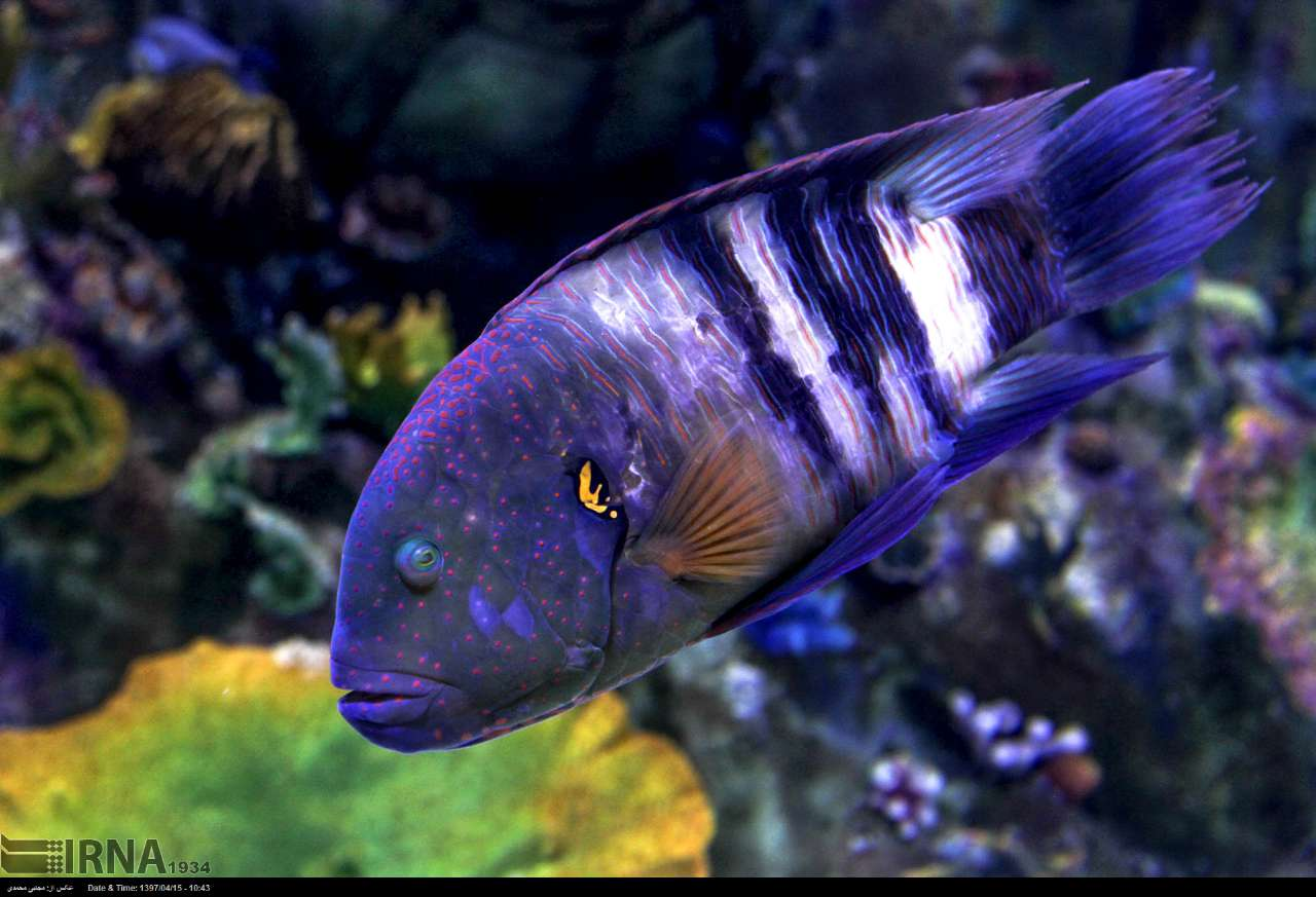 http://ifpnews.com/wp-content/uploads/2018/07/aquarium-anzali-6.jpg