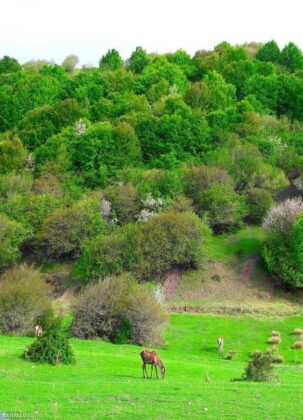 Fandoqloo Forest: A Scenic Natural Beauty in Northwestern Iran