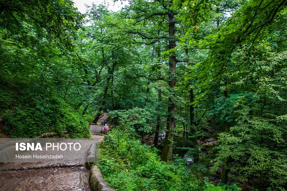 https://ifpnews.com/wp-content/uploads/2018/08/Rudkhan-Forest-10.jpg