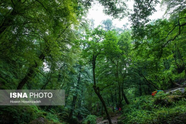 Rudkhan Castle Forest; Natural Gem in Northern Iran