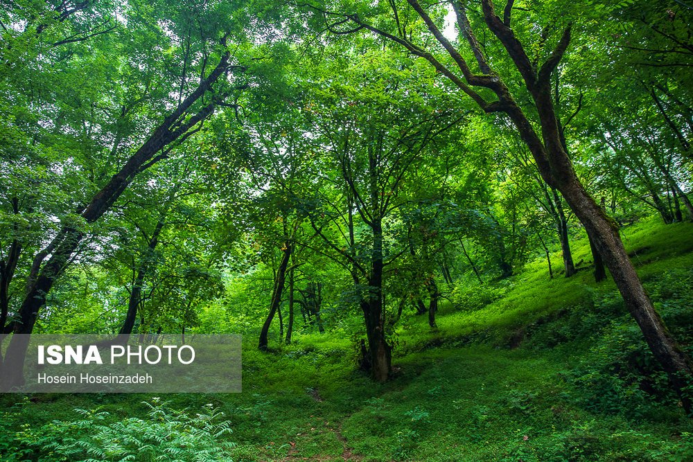 https://ifpnews.com/wp-content/uploads/2018/08/Rudkhan-Forest-16.jpg