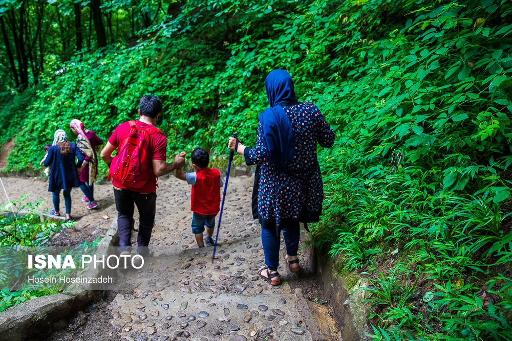 https://ifpnews.com/wp-content/uploads/2018/08/Rudkhan-Forest-18.jpg