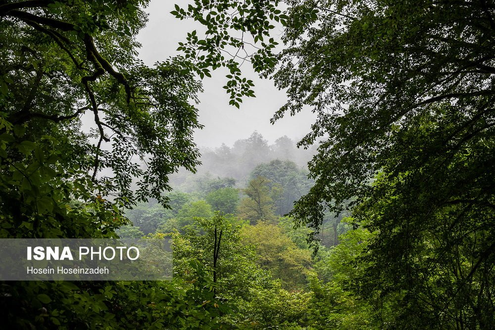 https://ifpnews.com/wp-content/uploads/2018/08/Rudkhan-Forest-19.jpg
