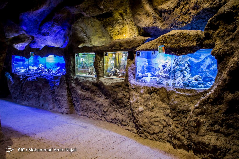 https://ifpnews.com/wp-content/uploads/2018/09/hamedan-aquarium-10.jpg