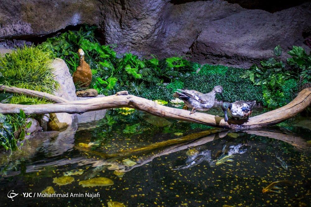 https://ifpnews.com/wp-content/uploads/2018/09/hamedan-aquarium-11.jpg