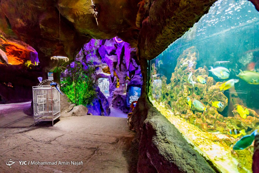 https://ifpnews.com/wp-content/uploads/2018/09/hamedan-aquarium-18.jpg