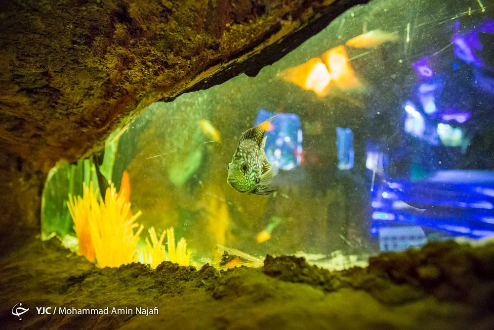 https://ifpnews.com/wp-content/uploads/2018/09/hamedan-aquarium-20.jpg