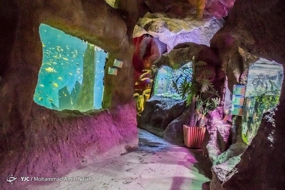 https://ifpnews.com/wp-content/uploads/2018/09/hamedan-aquarium-3.jpg
