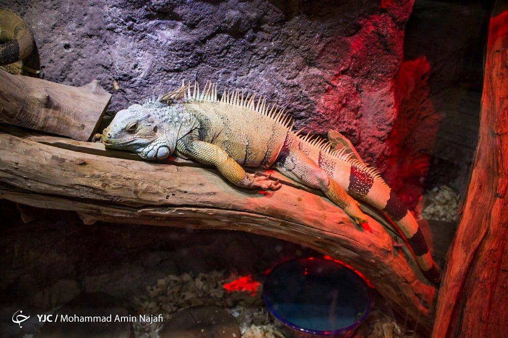 https://ifpnews.com/wp-content/uploads/2018/09/hamedan-aquarium-7.jpg