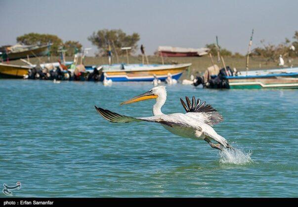 Sirik Lagoon, Iran