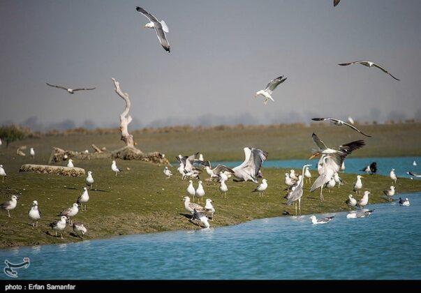 Birds in Sirik Lagoon, Iran