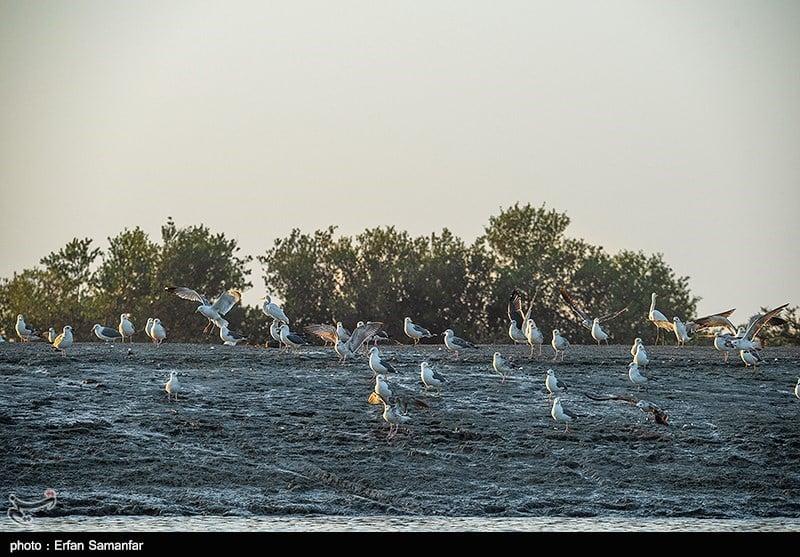 https://ifpnews.com/wp-content/uploads/2018/10/lagoon-hormozgan-2018-33.jpg