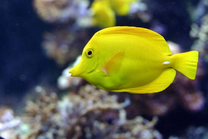 Researchers Use Marine Animals' Waste for Wound Treatment