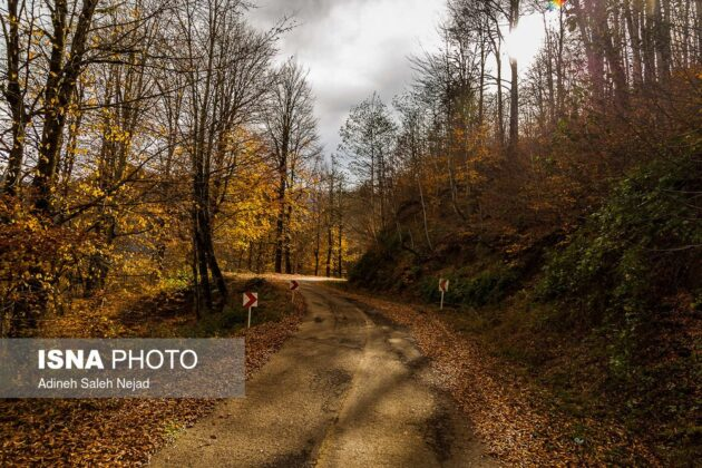 Autumn in Halidasht