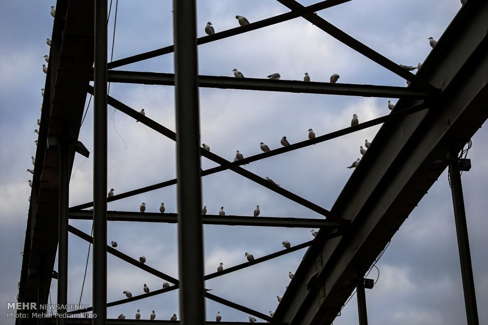 https://ifpnews.com/wp-content/uploads/2018/12/Iran%E2%80%99s-Karoon-River-Hosting-Migratory-Birds-1.jpg