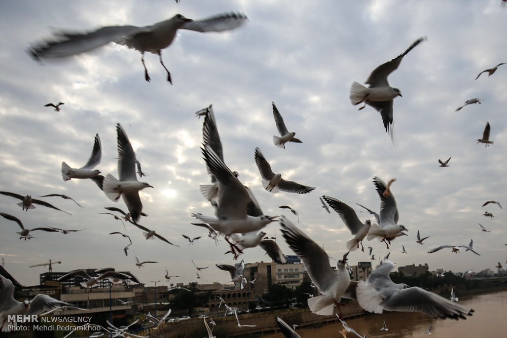 https://ifpnews.com/wp-content/uploads/2018/12/Iran%E2%80%99s-Karoon-River-Hosting-Migratory-Birds-10.jpg