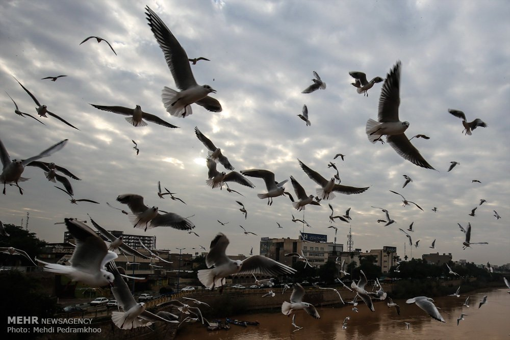 https://ifpnews.com/wp-content/uploads/2018/12/Iran%E2%80%99s-Karoon-River-Hosting-Migratory-Birds-14.jpg